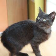 Katze Ronja - unsere