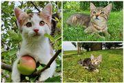 3 Kätzchen weiblich suchen ein