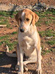 Mercury ein toller Hundefreund