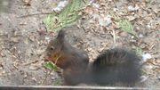 Eichhörnchen Europäisches Eichhörnchen von 2020