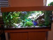 Juwel Aquarium mit Unterschrank 200l