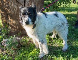 DASTY Border Colli Mischling - verspielte: Kleinanzeigen aus Rabenau - Rubrik Hunde
