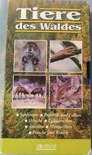 VHS Tiere des Waldes