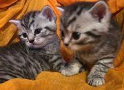 Katzenbabys suchen neues