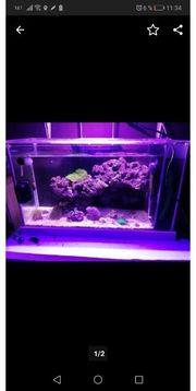 fluval spec 19l nano aquarium
