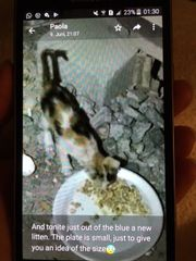 Katzenbaby Fortuny braucht
