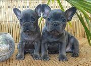 Frenchys in lilac Black blau