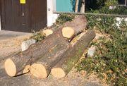 Lindenstammholz zu verkaufen