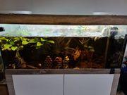 300L Aquarium Set Fine Line