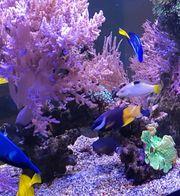 Meerwasser lebengestein korallenbruch riffkeramik
