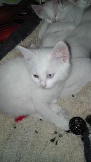 Kater Kitten