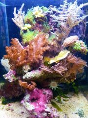 Salzwasser Aquarium 30 Liter zu