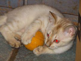 Bild 4 - Golden-Wildcat hat ALLE BABYS HABEN - Eimsheim