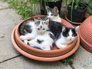 drei junge Kätzchen zu vermitteln -