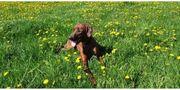 Wir bieten familiäre Hundebetreuung