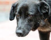 Traumhund Flash sucht seine Familie