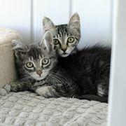Katzenjungs Jamey und Kolja suchen