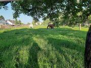 Pferdebox Pensionspferdeplatz Rehaplatz