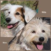 IKIRA NITA - auf PS in
