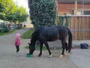 Suche Reitmöglichkeit auf Pony