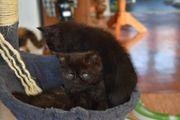 Katzenbabys suchen Zuhause