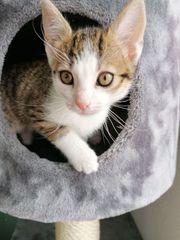 Liebe und süße Kätzchen