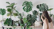 Ich suche Pflanzen