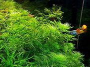Mato Grosso T -Blatt green