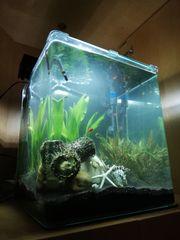 Aquarium - Nano Cube 50 Liter -