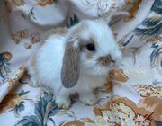 Kaninchen Hasen In Hamburg Kleintiere Kaufen Verkaufen Auf