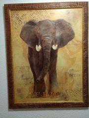 Elefant Bild Afrika
