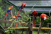 Gebe einem Papagei oder Pärchen
