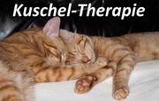 Kuschel- Haltetherapeut