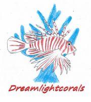 Aquaristik Aquarium Meerwasser Korallen