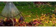 ich suche Gartenarbeit Umkreis Darmstadt-