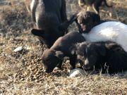 Unterstütz den nachhaltigen Tierschutz