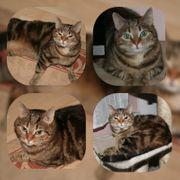 Katze Nala 5 Jahre sucht