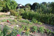 Kleingarten in Remscheid