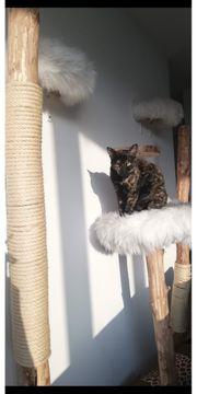 Katze und Kater suchen neues