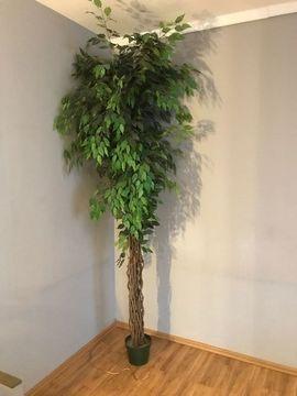 Kunstbaum Ficus ca 240cm gebraucht: Kleinanzeigen aus Nürnberg Almoshof - Rubrik Dekoartikel