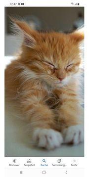 Suche Baby Katze