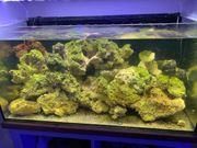 Meerwasser Lebendgestein Steine 26kg