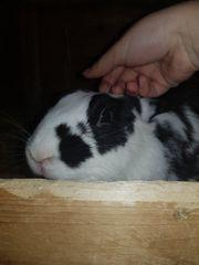 Biete Tierbetreuung für Kaninchen und