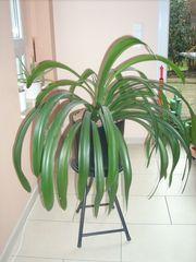 Grünpflanze Zimmerpflanze