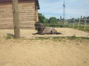 Offenstall Stellplatz Stallplatz Pony