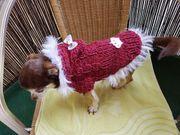 Alpaka Schurwoll Hundepullover mit Halswärmer