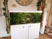 Aquarium Komplett mit Unterschrank von