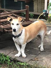 Tierschutzhund Wanda ca 5 Jahre