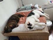2 Hauskatten abzugeben
