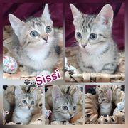 Kitten Baby Katze Sissi geimpft